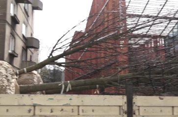 Sadzimy drzewa na ulicy Rajskiej