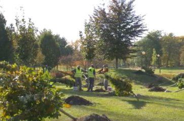 Drzewa na 25-lecie współpracy Krakowa ze Lwowem